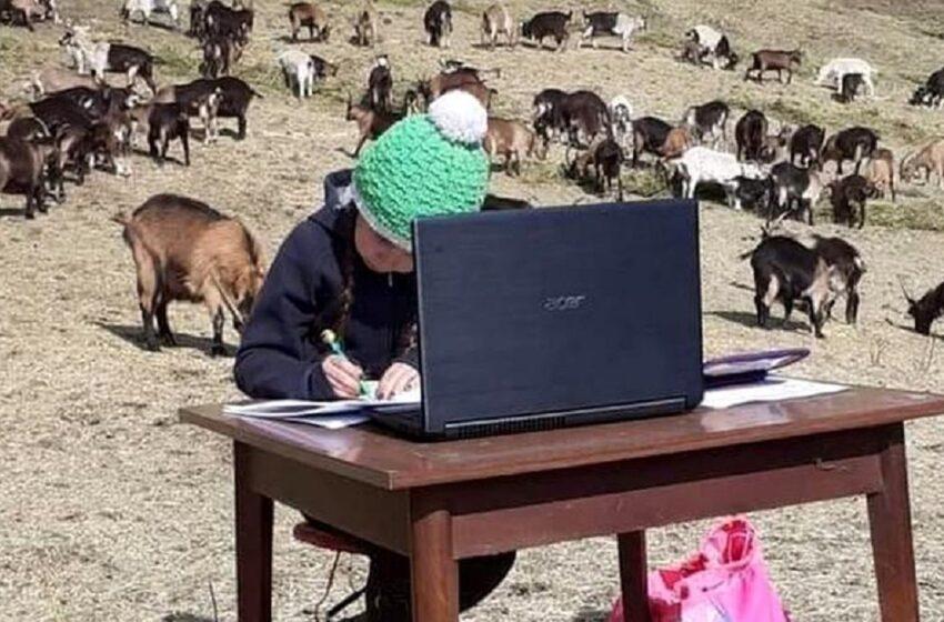 O fetiță de 10 ani din Italia face lecțiile online pe vârf de munte, între animale